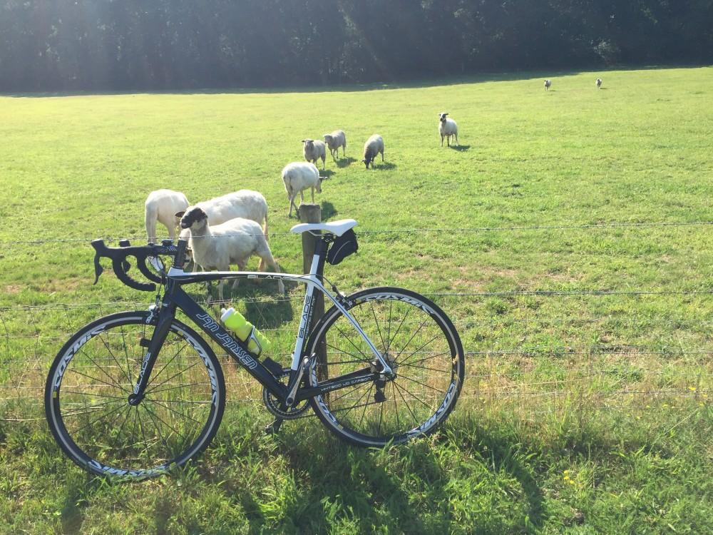 bandenspanning wielrennen fiets bike milesandmore schapen