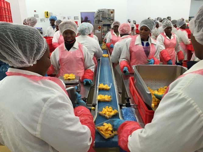 BlueSkies Ghana mango