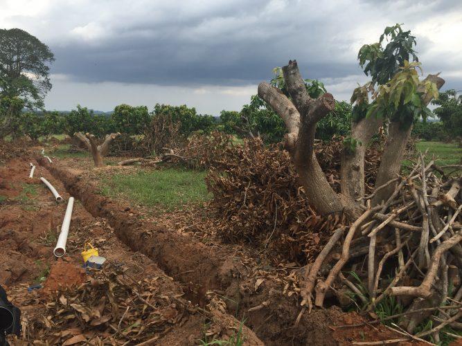mango plantage irrigaties systeem