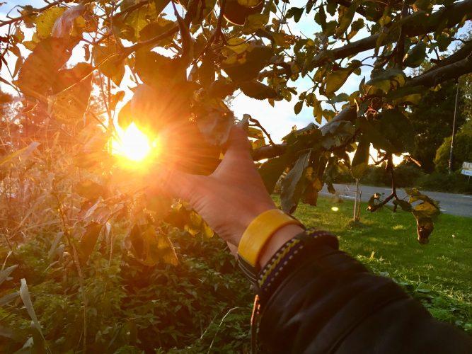 appels plukken voor de lekkerste appeltaart ooit