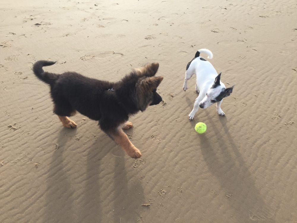 monster maakt vrienden op het strand