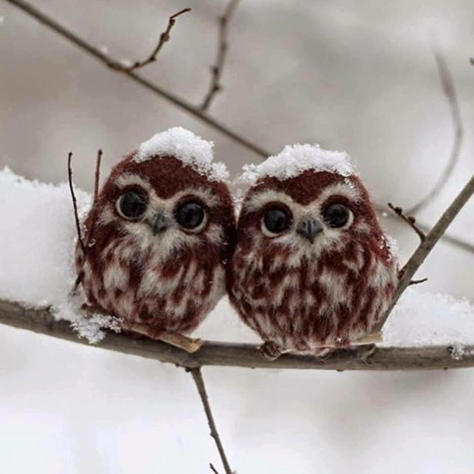 schattige uiltjes met sneeuw