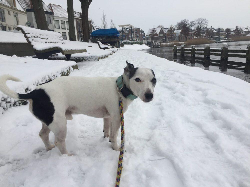 Monster in de sneeuw in Weesp