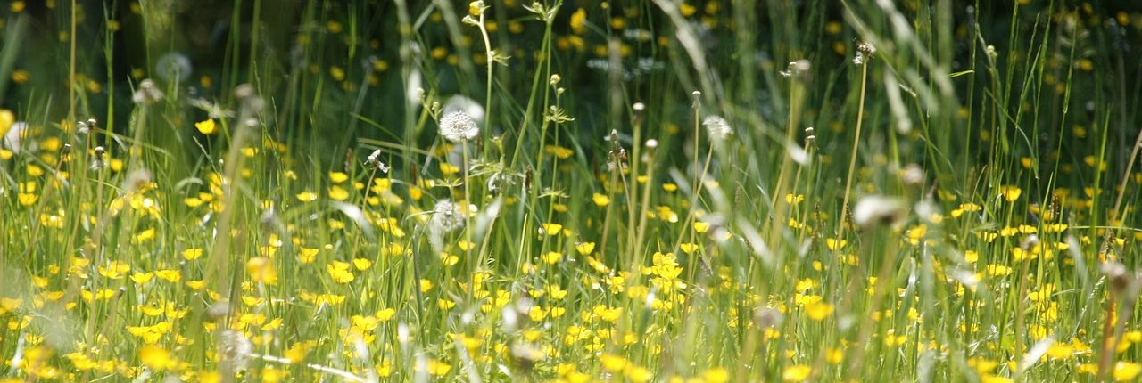bloemen pollen zomer hooikoorts