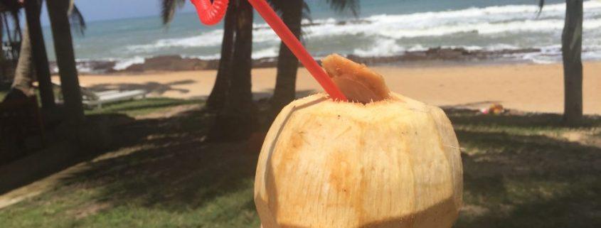 kokosnoot Ghana strand Albert Heijn
