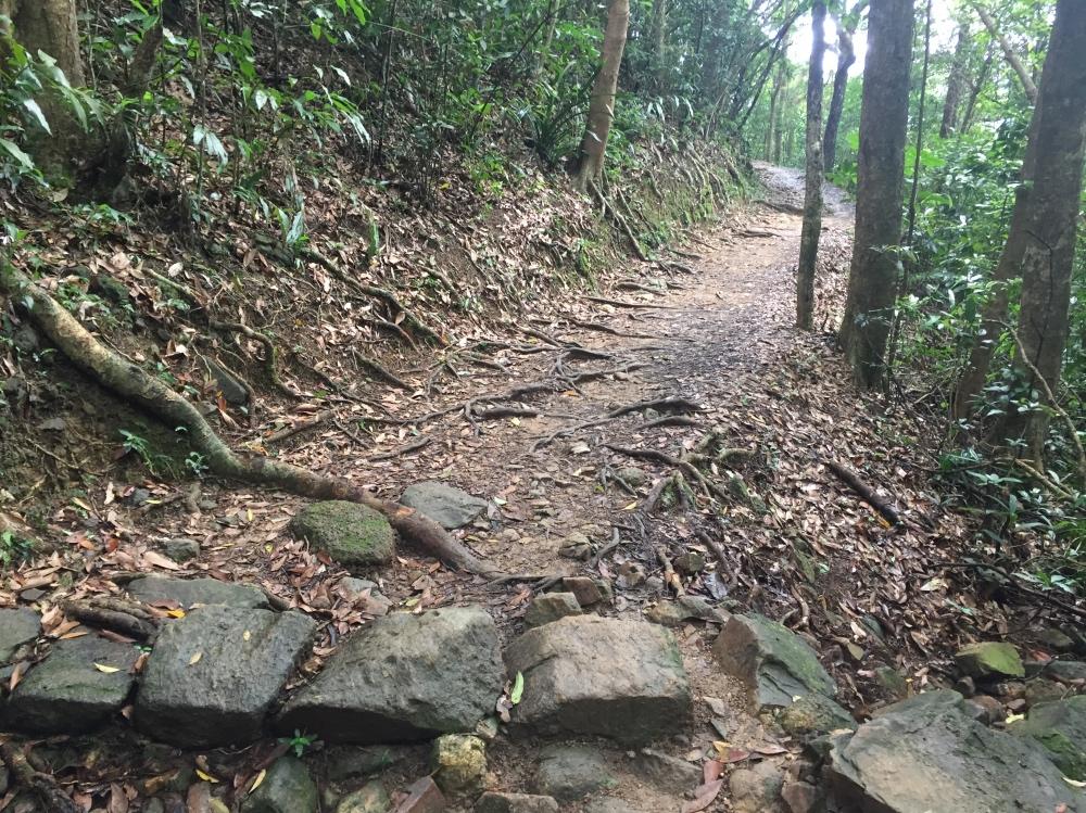 eerste stuk van de trail gaat door het bos
