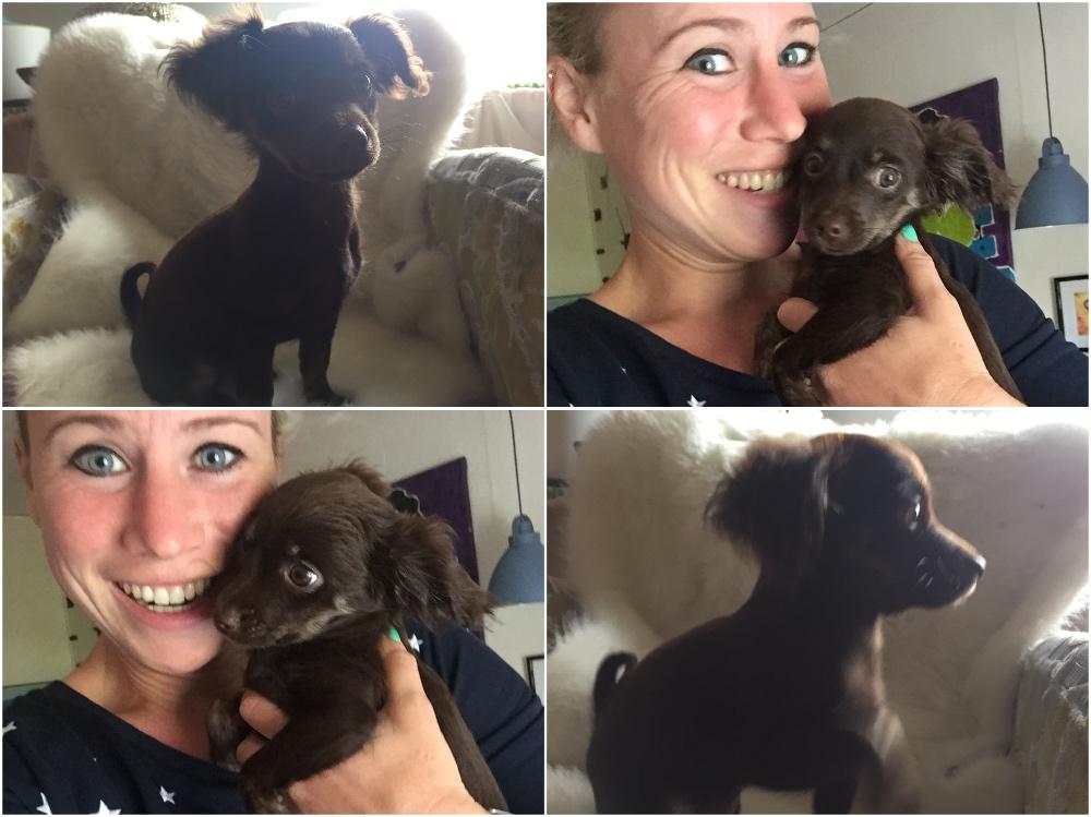 lief puppy Phoebe
