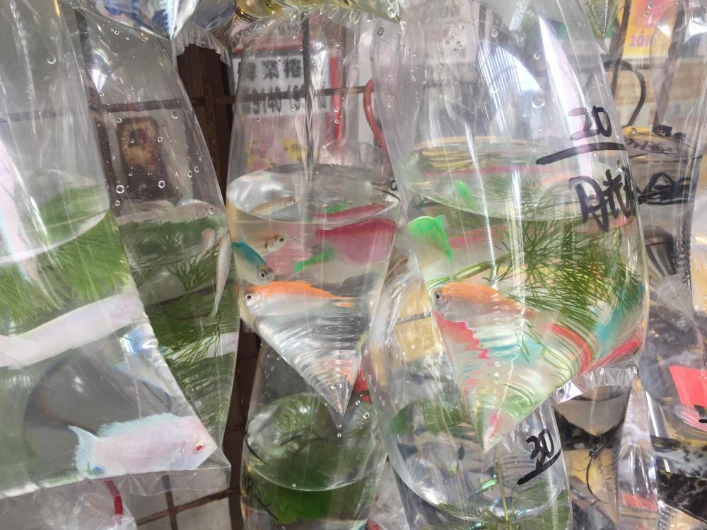 visjes in een zakje in Mongkok