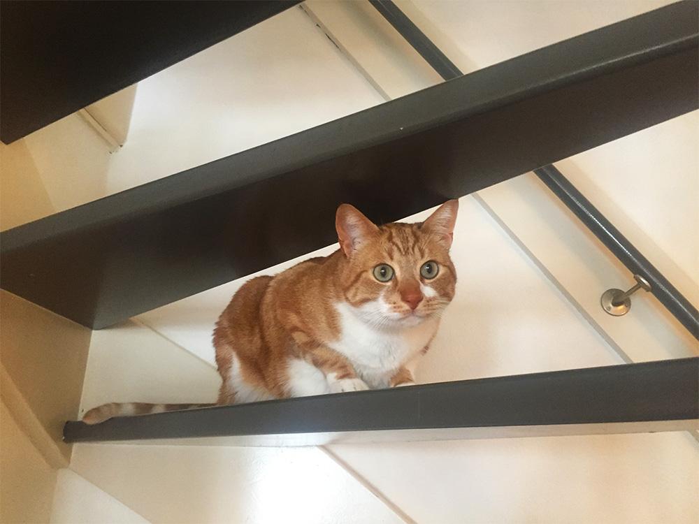 Puss wil niet naar huis